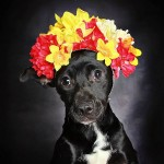 Overlooked Black Dogs Get Adopted With Beautiful Portraits